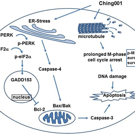 Ching001 inhibits A549 xenograft growth via M-phase arrest