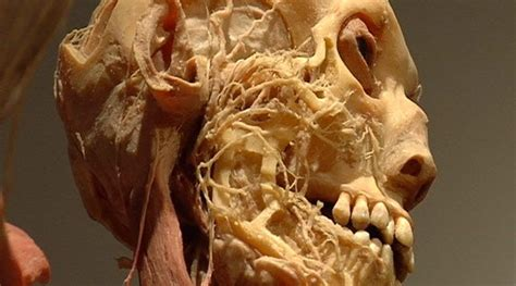 Bodies the Exhibition Shows You What's Inside You - News9