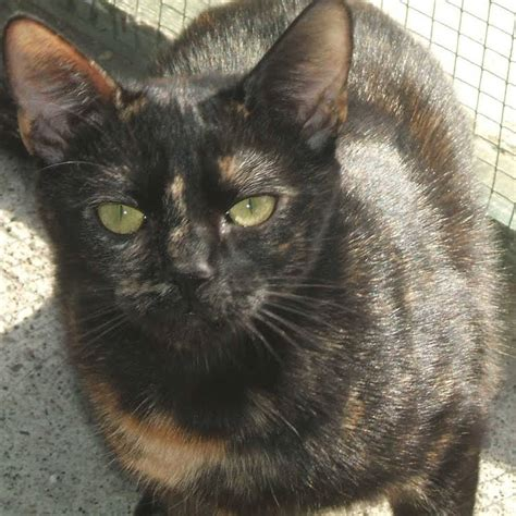 Yorkshire Cat Rescue - A rehoming centre for stray and