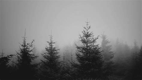Beautiful Trees Animated Gif Images - Best Animations
