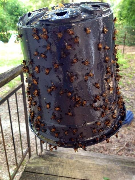 Tired of Yellow Flies? A DIY Yellow Fly Trap that REALLY