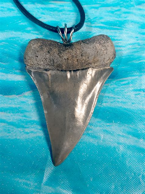 Museum Quality Wireless Mako Shark Tooth Necklace · MegaTeeth