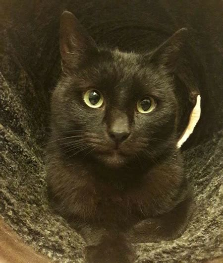 Yorkshire Cat Rescue - Declan's Story - Give as you Live Blog