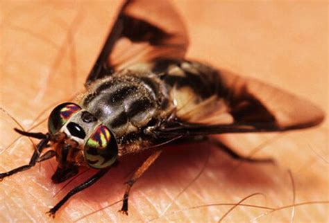 Bad Bugs: Identify Insects and Bug Bites