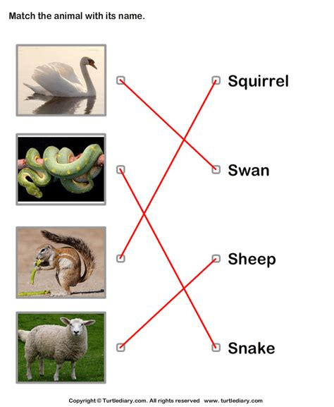 Animals Names With Pictures Worksheet - Turtle Diary